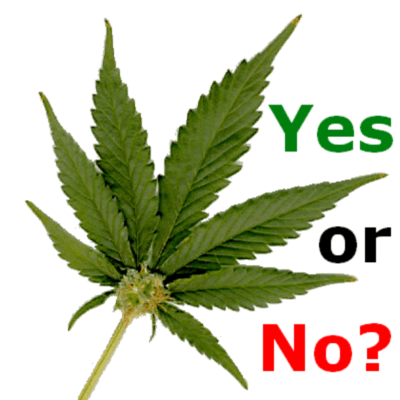 Image result for marijuana yes or no