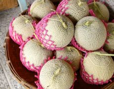 38451562 - fresh cantaloupe for sale at the market