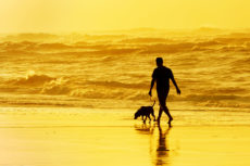 34759653 - person walking the dog on the beach at sunset