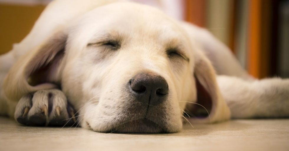 Image result for watchdogs sleeping